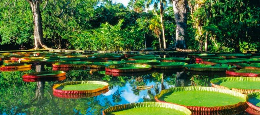 New grove - Rhum Ile Maurice