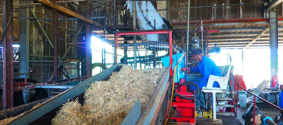 Visite Distillerie Reimonenq - Guadeloupe
