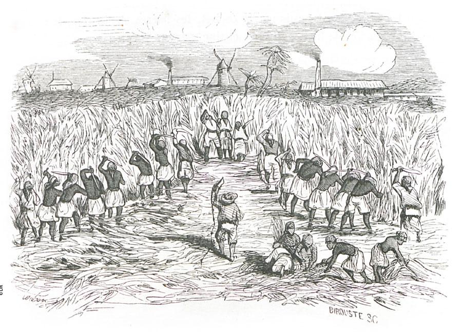 Histoire Rhum français
