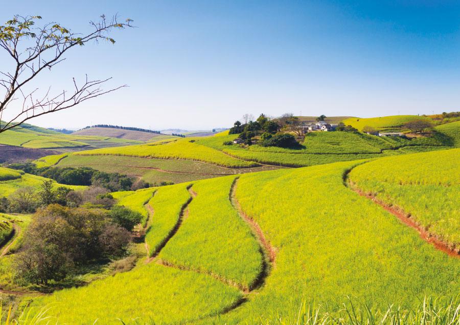 rhums Afrique du sud
