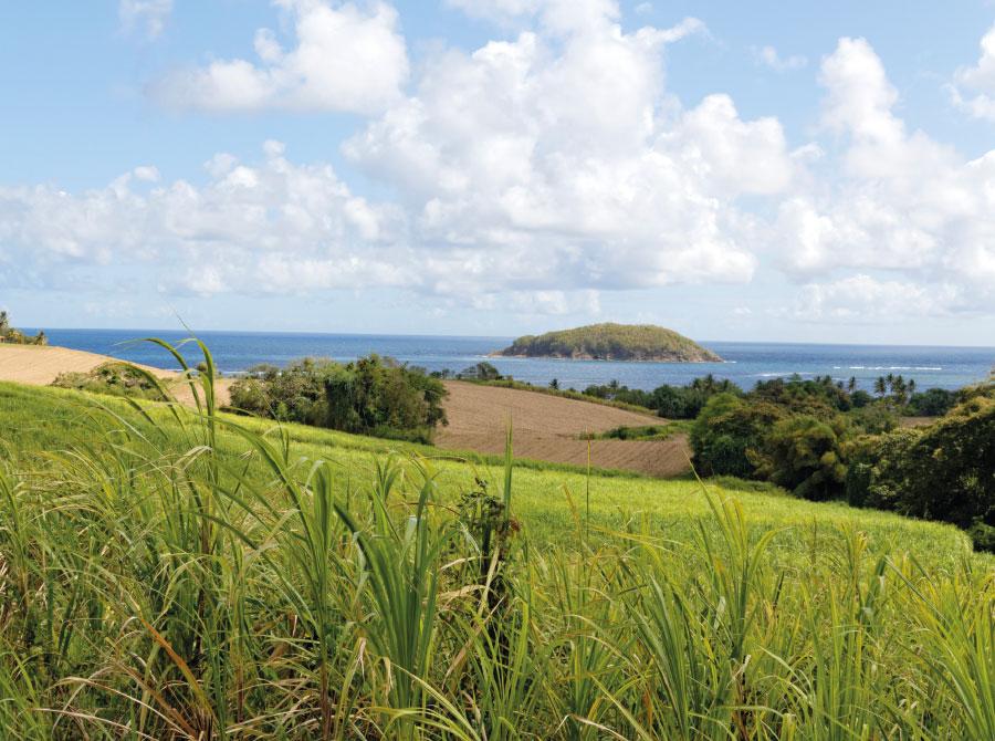 Rhums saint james Martinique