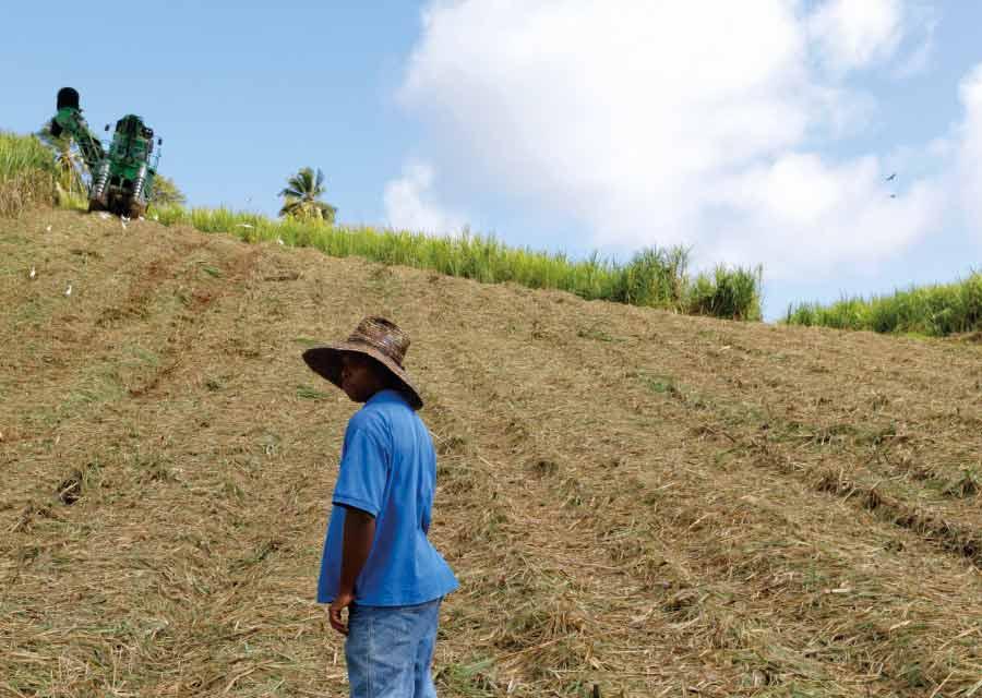 Rhum et développement durable