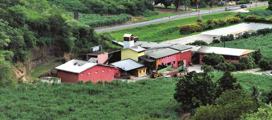 Rhum de Martinique