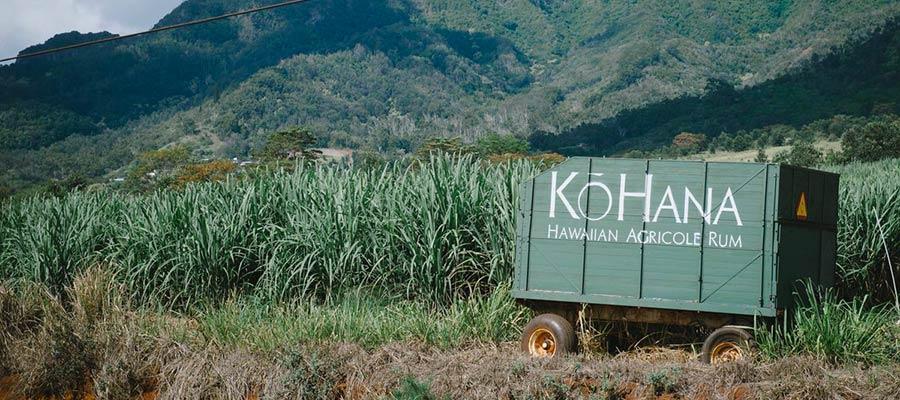 Kō Hana au pays de Kamehameha