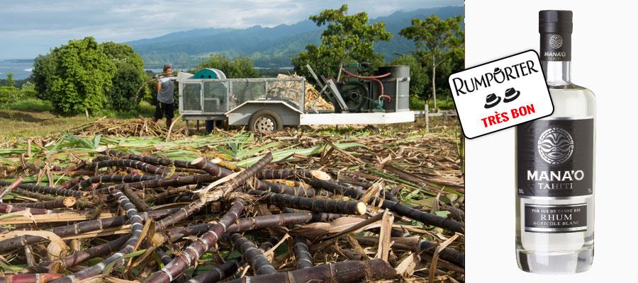 Dégustation Mana'o Blanc Bio – Escale à Tahiti 2/2