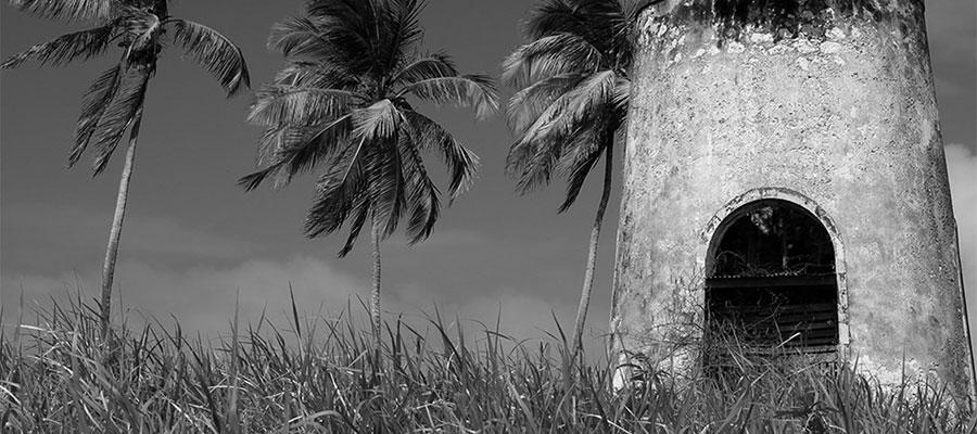 Saccharhum : un ouvrage envoûtant dans le monde de la canne à sucre