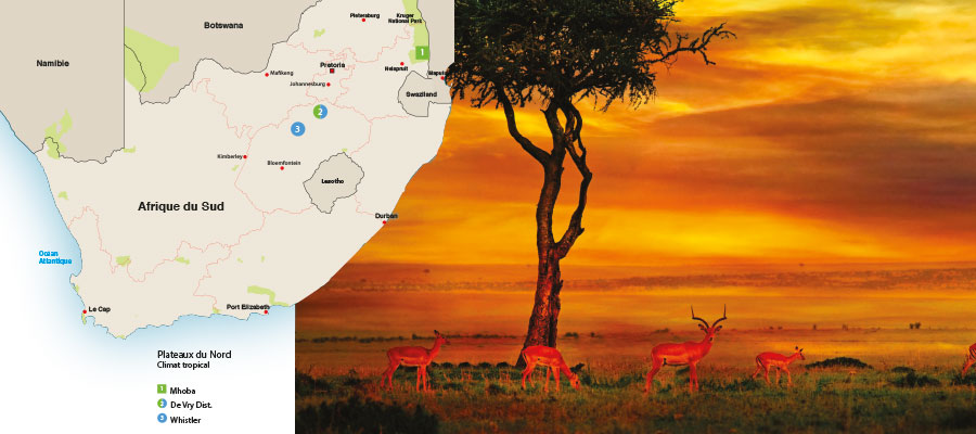 Banc d'essai – Out of South Africa #1 – Plateaux du nord climat tropical