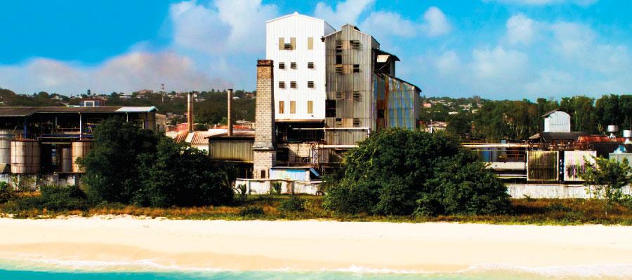 Wird plantation Barbade