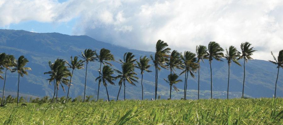 Dossier – Le rhum à La Réunion #1 : L'île à canne