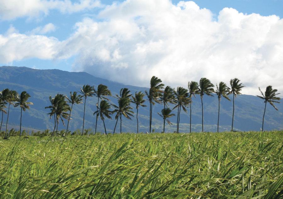 Le rhum à La Réunion