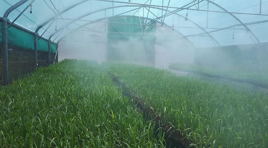 Depaz plantation